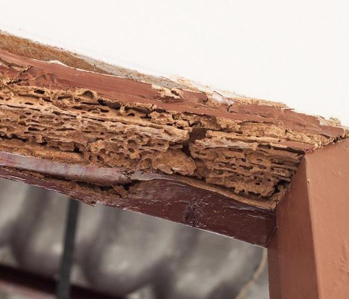 Building Services Tiny Holes in Drywall or Wood Can be the sign of a Bigger Problem
